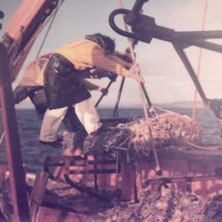 Working the dredge